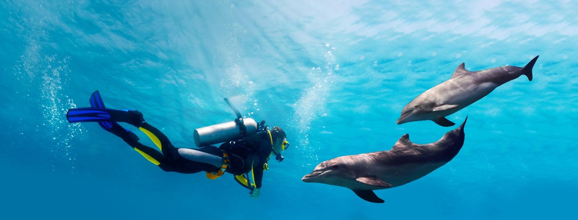 Фото - Дайвинг с дельфинами