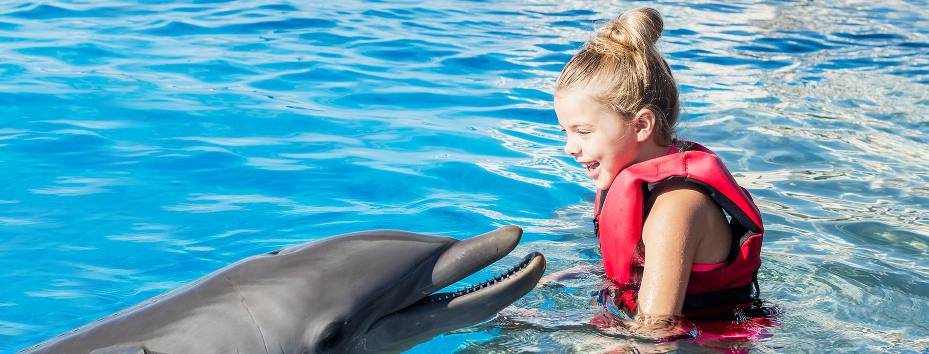 Фото - Тренировка с дельфинами