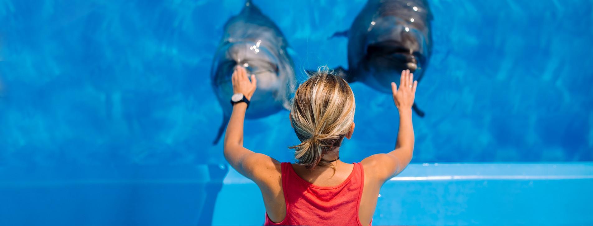 Фото - Тренування з дельфінами для двох
